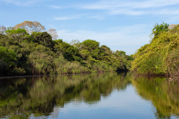 jungle view from the river. Pantanal landscape