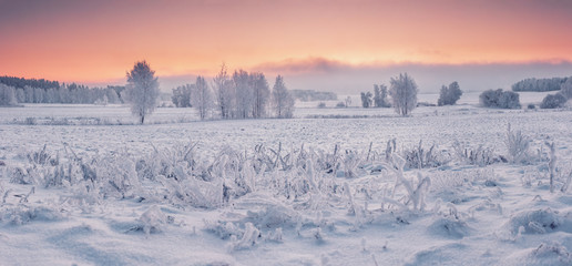 Panoramic winter nature landscape at dawn