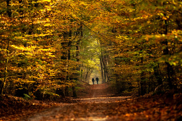 Forest trail with hiking and sporty people in colorful autumn woods