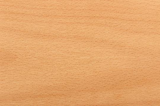 Red beech wood texture surface detail
