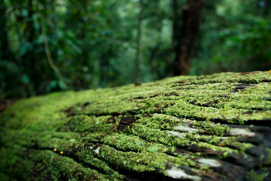 Fallen Moss Covered Log In Beautiful Magical Australian Rainforest
