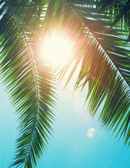Poster Turquoise Coconut tree on the sky background