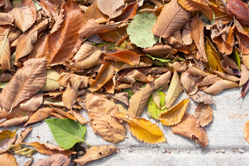 Colourful fall leaves on sidewalk