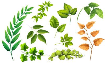 Set of different leaf