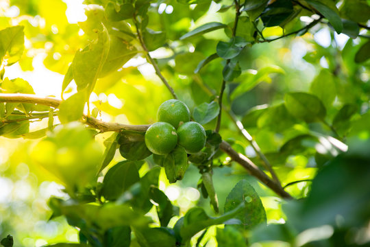 Lime be fresh