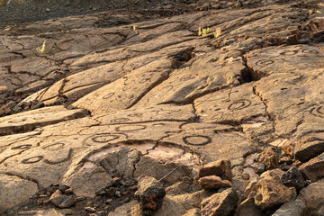 """Petroglyphs carved into volcanic rock, on the King's Trail (""""Mamalahoa""""), near Kona on the Big Island of Hawaii. Earliest carvings in the area are more than a century old."""