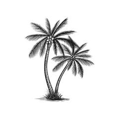 Hand drawn coconut tree vector