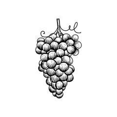 Hand drawn grapes logo design inspiration