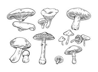 Mushroom hand drawn vector illustration isolated on white background.