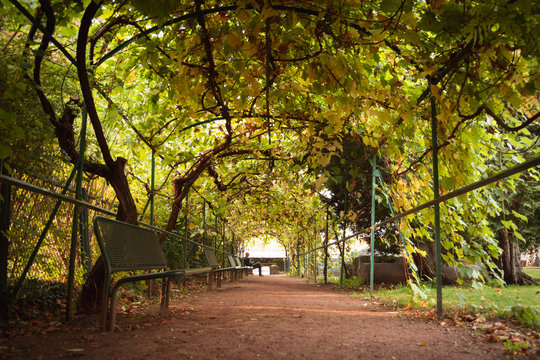 Man sitting on a bench in a tunnel of tree's on an autumn day.