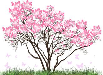 pink magnolia blossom tree in green grass