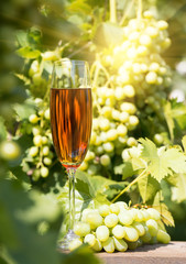 Glass of wine and bunch of grapes on background of bright sun