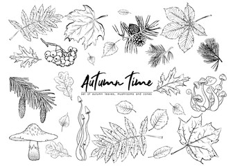Autumn vector set with leaves, berries, fir cones,  mushrooms. Detailed forest botanical elements for decoration. Vintage fall seasonal decor. Oak, maple, chestnut leaf drawing.