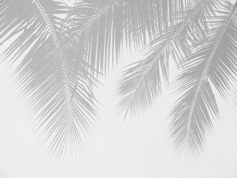 Palm leaf shadows on a white wall