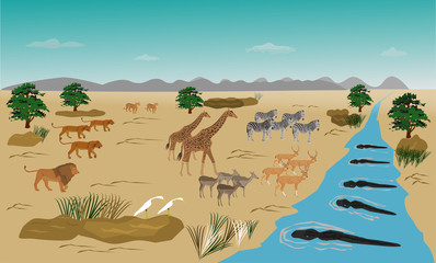 Herd of animals standing on the river. Because run out. From the swarm of lions. And the crocodile in the water