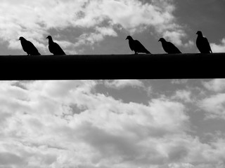 silhouette of pigeon sitting on steel structure black and white