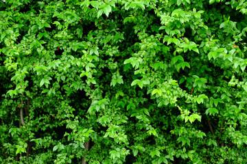leaf and bush plant