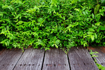 Spring green plant over wood floor
