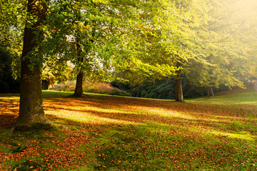 Beautiful English Public Garden during Fall Season, England, UK
