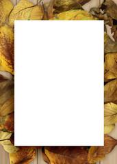 가을 백그라운드, 가을 프레임 & 오브젝트