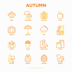 Autumn thin line icons set: maple, mushrooms, oak leaves, apple, pumpkin, umbrella, rain, candles, acorn, rubber boots, raincoat, pinecone, squirrel. Modern vector illustration.