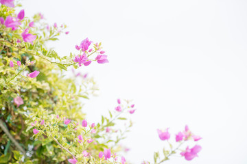 Background of small pink flowers.