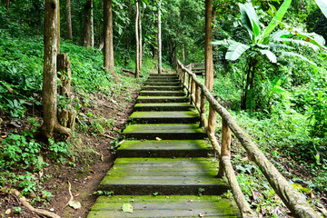 Concrete footpath in the forest background.Cement pavement in the jungle