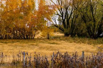 Twizel in Autumn