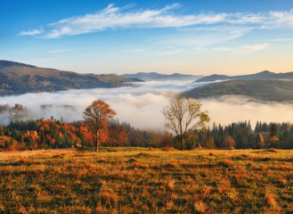 autumn morning in the Carpathian mountains. scenic foggy dawn