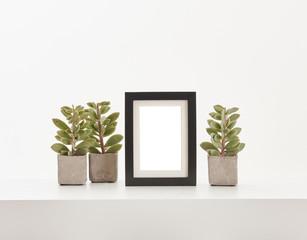 Black frame vase of plant on the white floor and white background