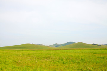 Foto op Canvas Wijngaard beautiful natural scenery in the WuLanBuTong grassland, China