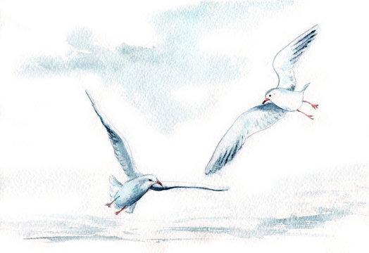 watercolor drawing of birds. seagulls in flight