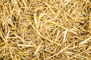 Fototapeta a bunch of straw for texture or background obraz