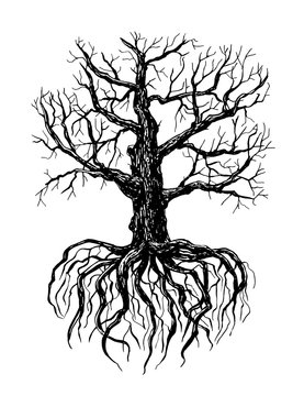 Hand drawn illustration of a bare tree with root on white background.