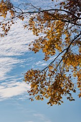 Wolken Herbstblätter
