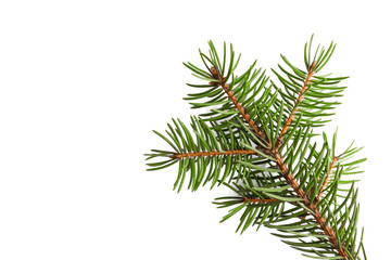 Christmas-tree branch isolated on a white background.