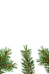 Christmas tree branches on a white isolated background.