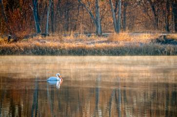 Pelican on White Rock Lake