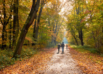 Spaziergang im Herbswald
