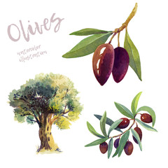 Olives watercolor hand drawn illustration