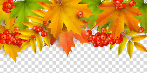 Autumn background or border, autumn leaves and berries, isolated on white background