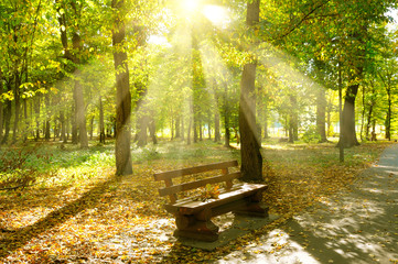 Autumn park with paths and bench. The sun rays illuminate Yellow leaves of trees.