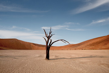 Foto op Plexiglas Zalm Dead Camelthorn Trees against red dunes and blue sky in Deadvlei, Sossusvlei. Namib-Naukluft National Park, Namibia, Africa