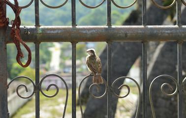 Little bird on iron door, Puebla Mexico.