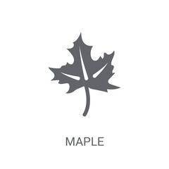 Maple icon. Trendy Maple logo concept on white background from Nature collection