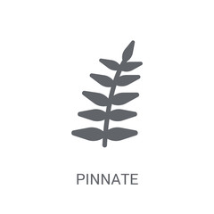 Pinnate icon. Trendy Pinnate logo concept on white background from Nature collection