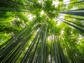 Zelfklevend Fotobehang Bamboe Amazing wide angle view of the Bamboo Forest in Kamakura