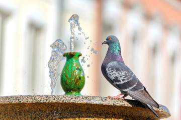 The dove sits by a small fountain.