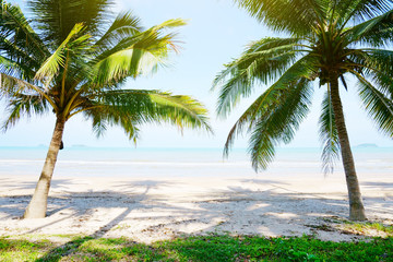 Summer tropical beach with palms.