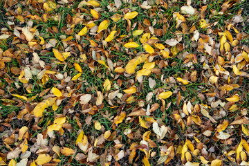 Fall leaves in ground background.